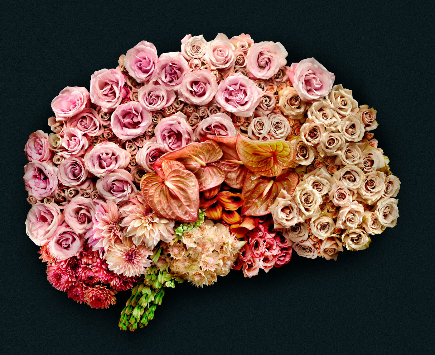 flowers_brain_revised_web